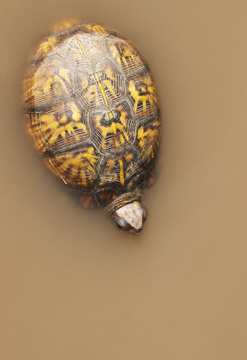 Turtle: aerial view.
