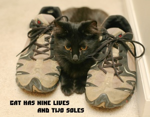 shoefetishcat9532.jpg