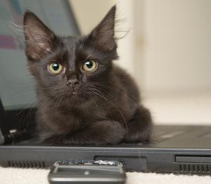 laptopcat6512