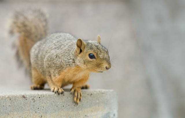 squirrel_0219