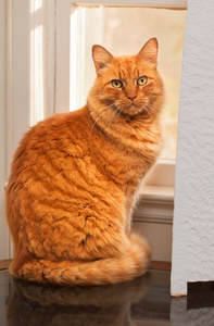 orange_cat_window_0748
