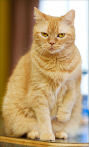 yellow_cat_5617