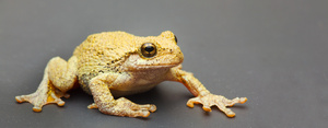 frog_7465