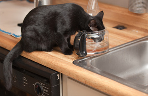 drinking_cat_2039web