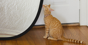 reflector_cat_0885web